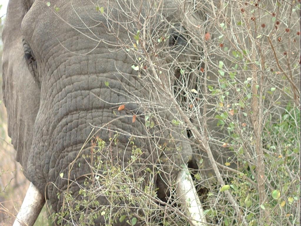 2005_08_Africa (21)